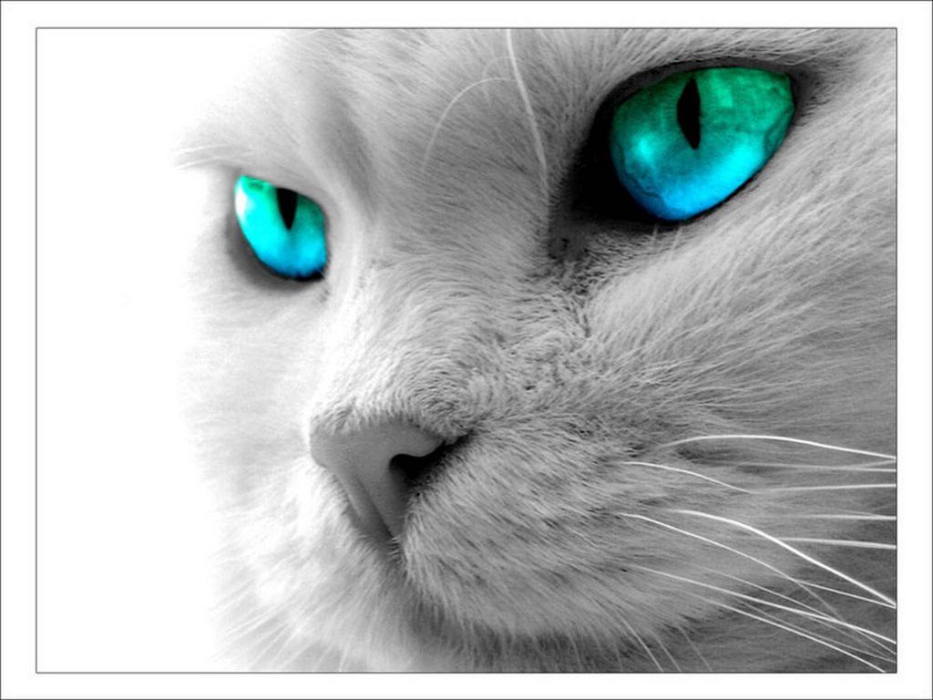 1248-yeux-bleus-verts-WallFizz dans fond ecran yeux