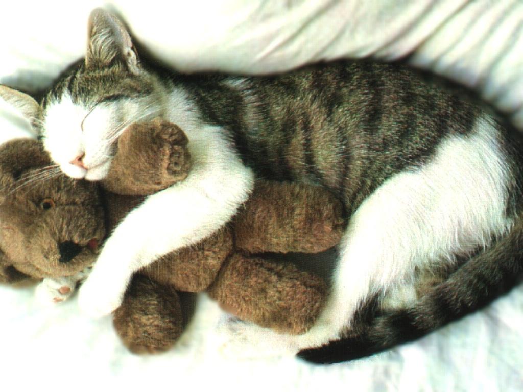 3393-chat-dort-avec-peluche-WallFizz