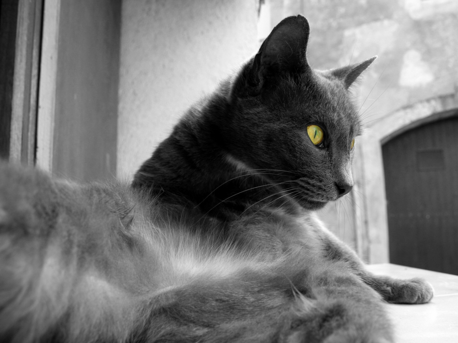 Le blog de leclandelalune - Yeux vert gris ...