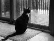 Chat devant la pluie