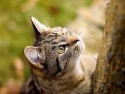 Chat et arbre