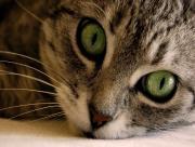 Zoom Cat
