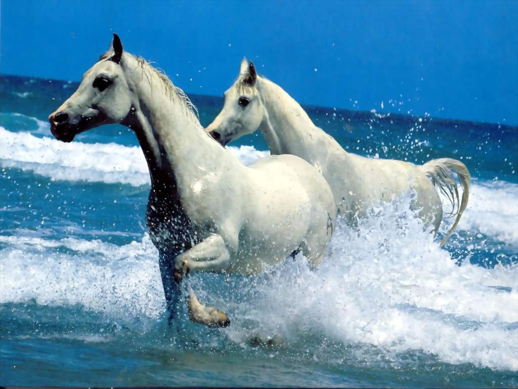 Fond d 39 ecran cheval gratuit 771 wallpaper - Chevaux gratuits ...