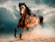 Magnifique cheval au galop