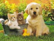 Un chien et deux chats