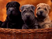 Trois chiens mignons