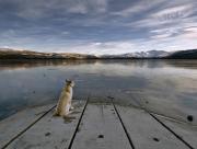 Chien et lac gelé