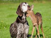 Amis chien et daim