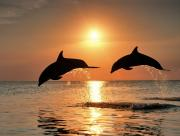 Dauphins saut soleil