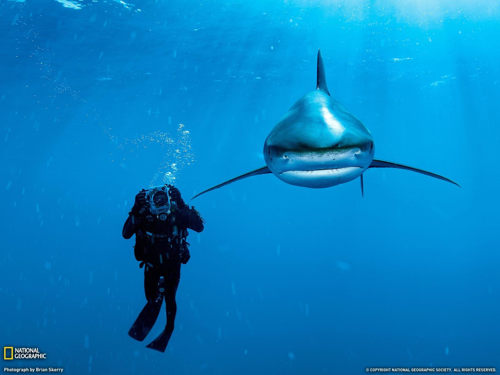 Fond D Ecran Attention Au Requin Wallpaper