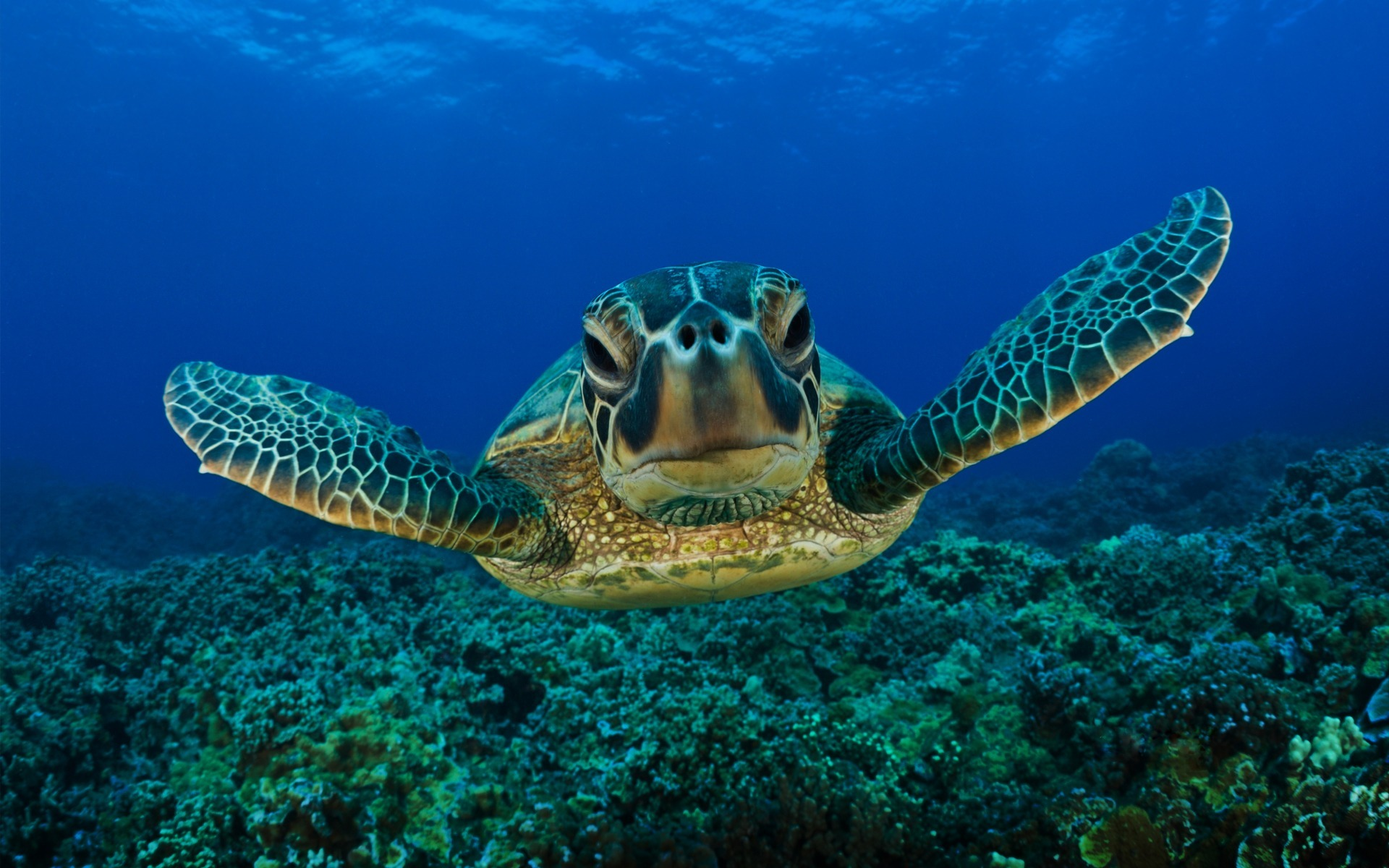 Fond d 39 ecran tortue de mer wallpaper for Photo ecran mer