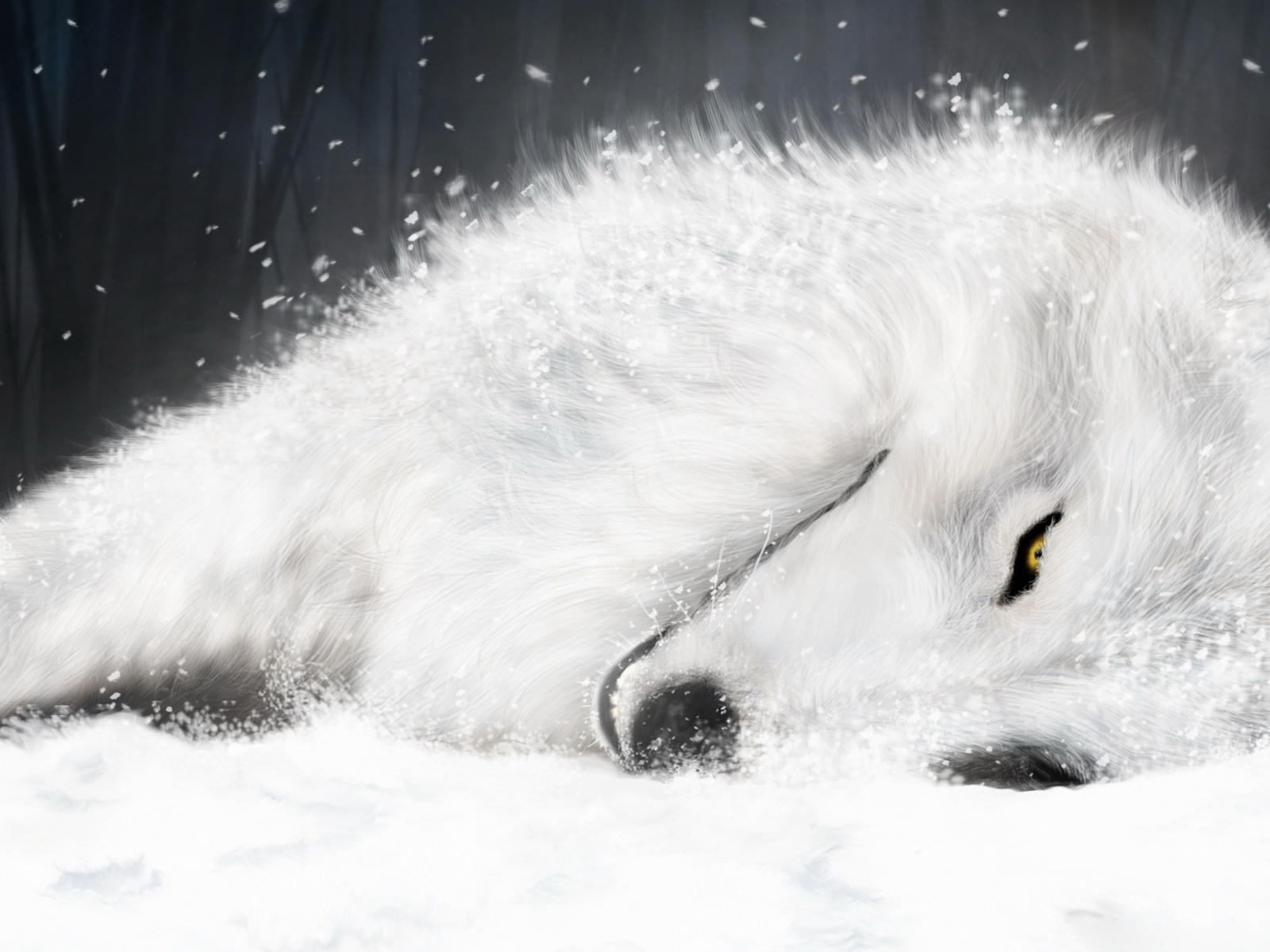 wallpaper loup fond - photo #32