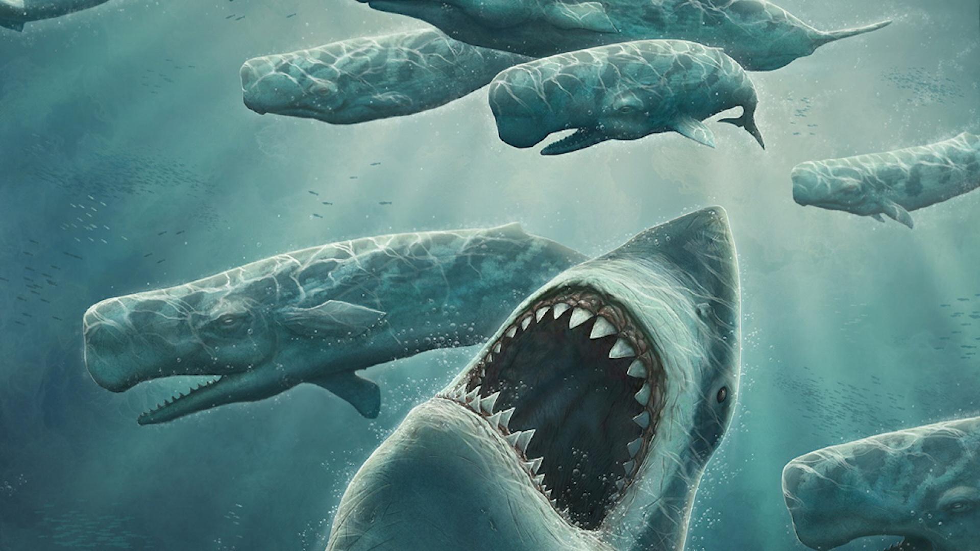 Fond D Ecran Requin Blanc Baleines Wallpaper