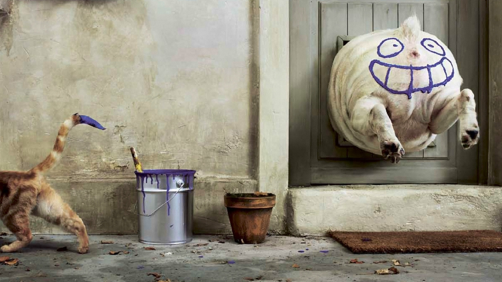 Fond d 39 ecran humour de chat chien wallpaper for Fond ecran humoristique