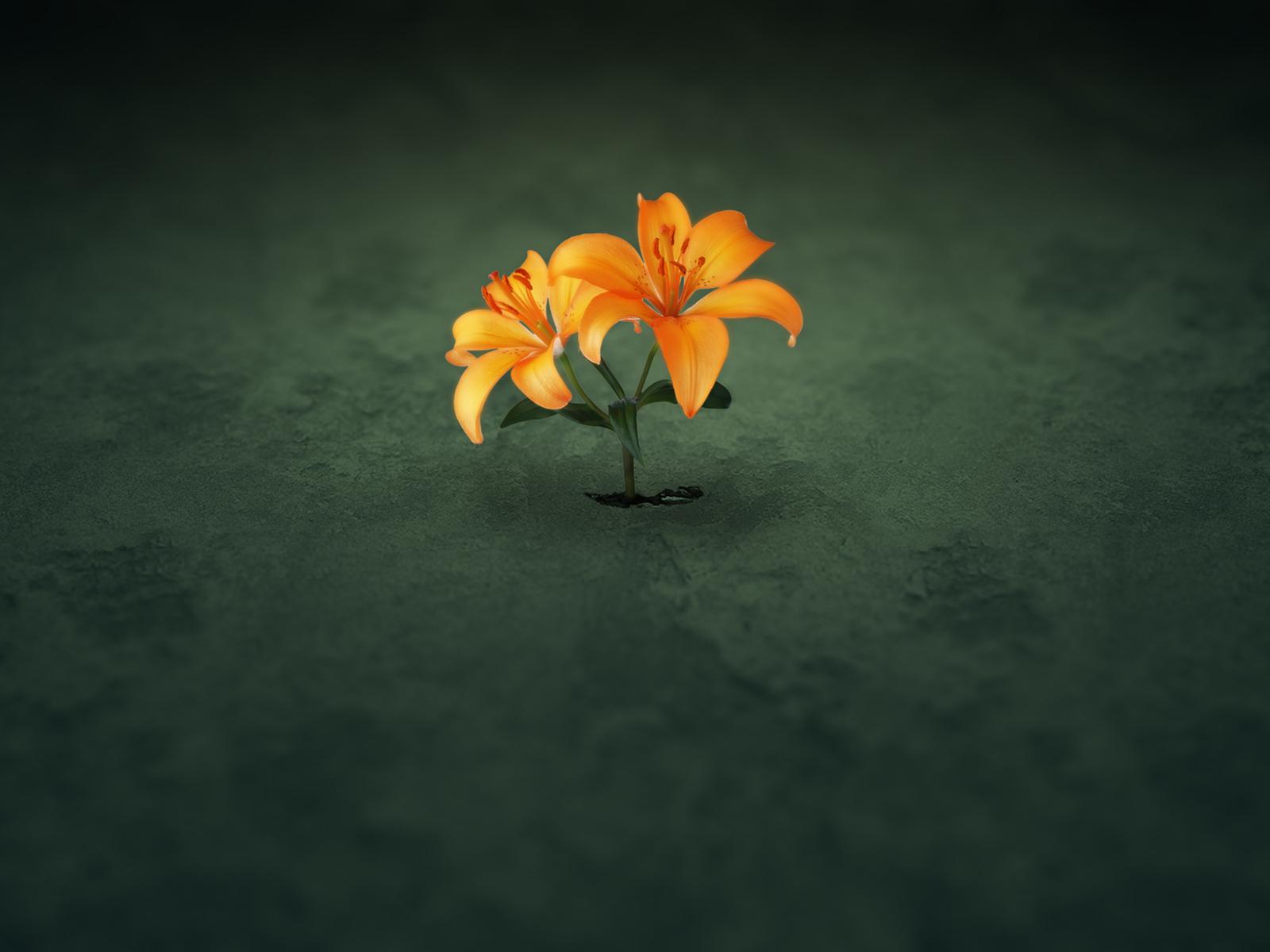 3084-fleur-sur-green-WallFizz