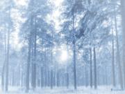 Arbres sous la neige de Noel