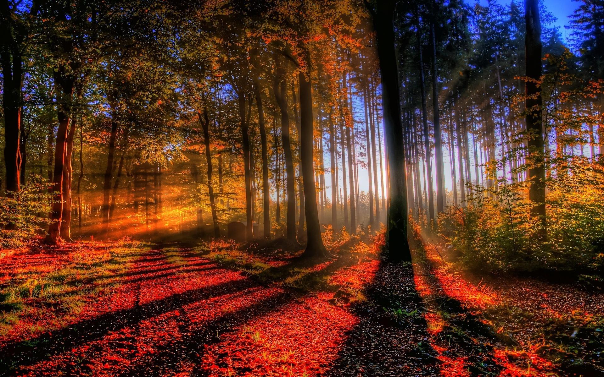 Fond d'ecran Sentier en forêt - Wallpaper