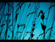 herbes bleues