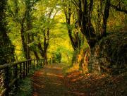Promenade dans les bois