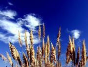 Nature vers le ciel