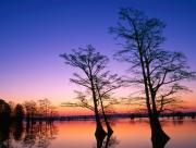 Arbres et lac sous couché de soleil