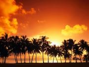 Palmiers couché de soleil