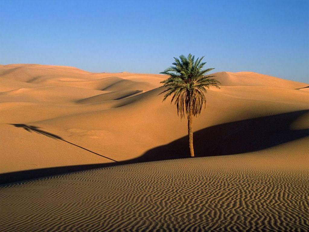 608-oasis-dans-le-desert-WallFizz