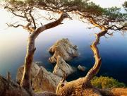 Falaises arbre et mer
