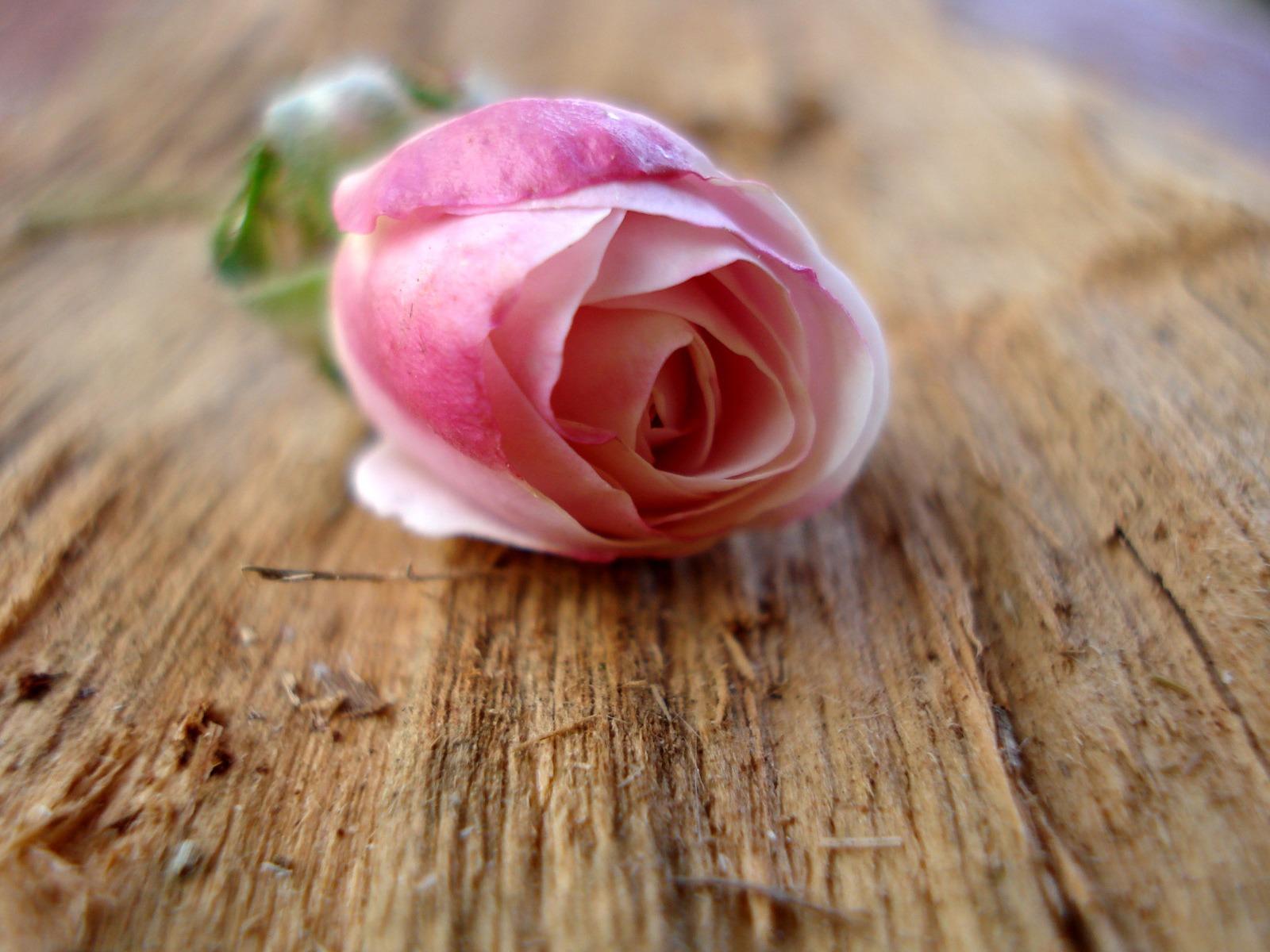 Fond D Ecran De Fleur Rose Idee D Image De Fleur