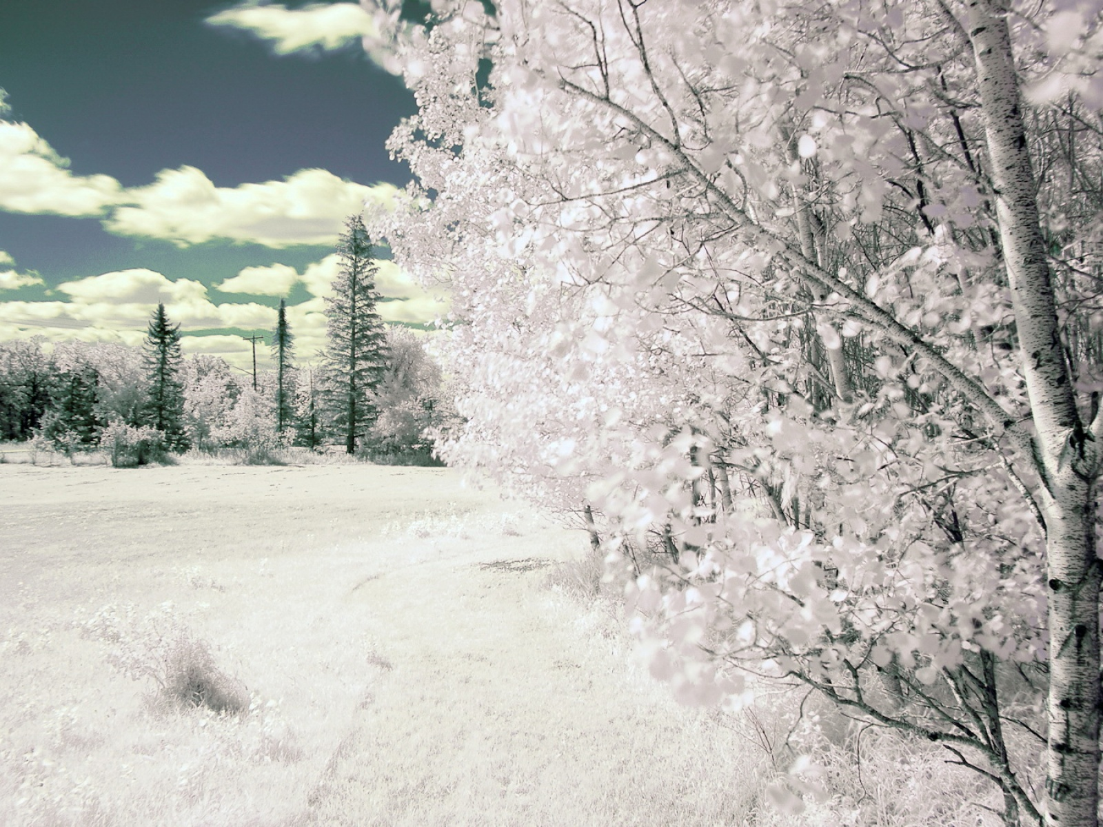 Fond d'ecran Arbre et paysage d'hiver - Wallpaper