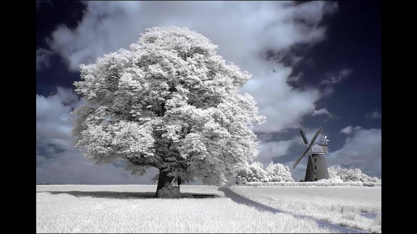 dans fond ecran neige 563-neige-WallFizz
