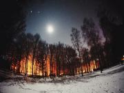 Lisière foret neige