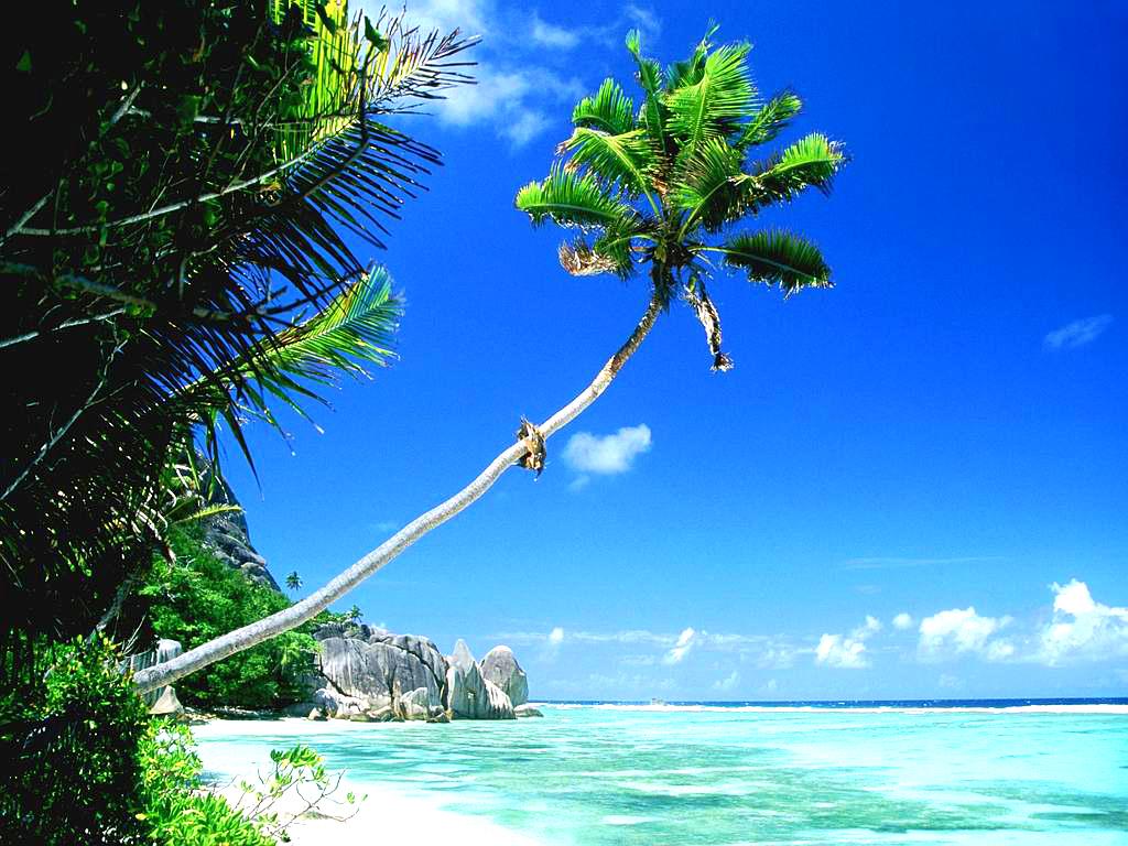 Fond d'ecran Palmier sur la plage - Wallpaper