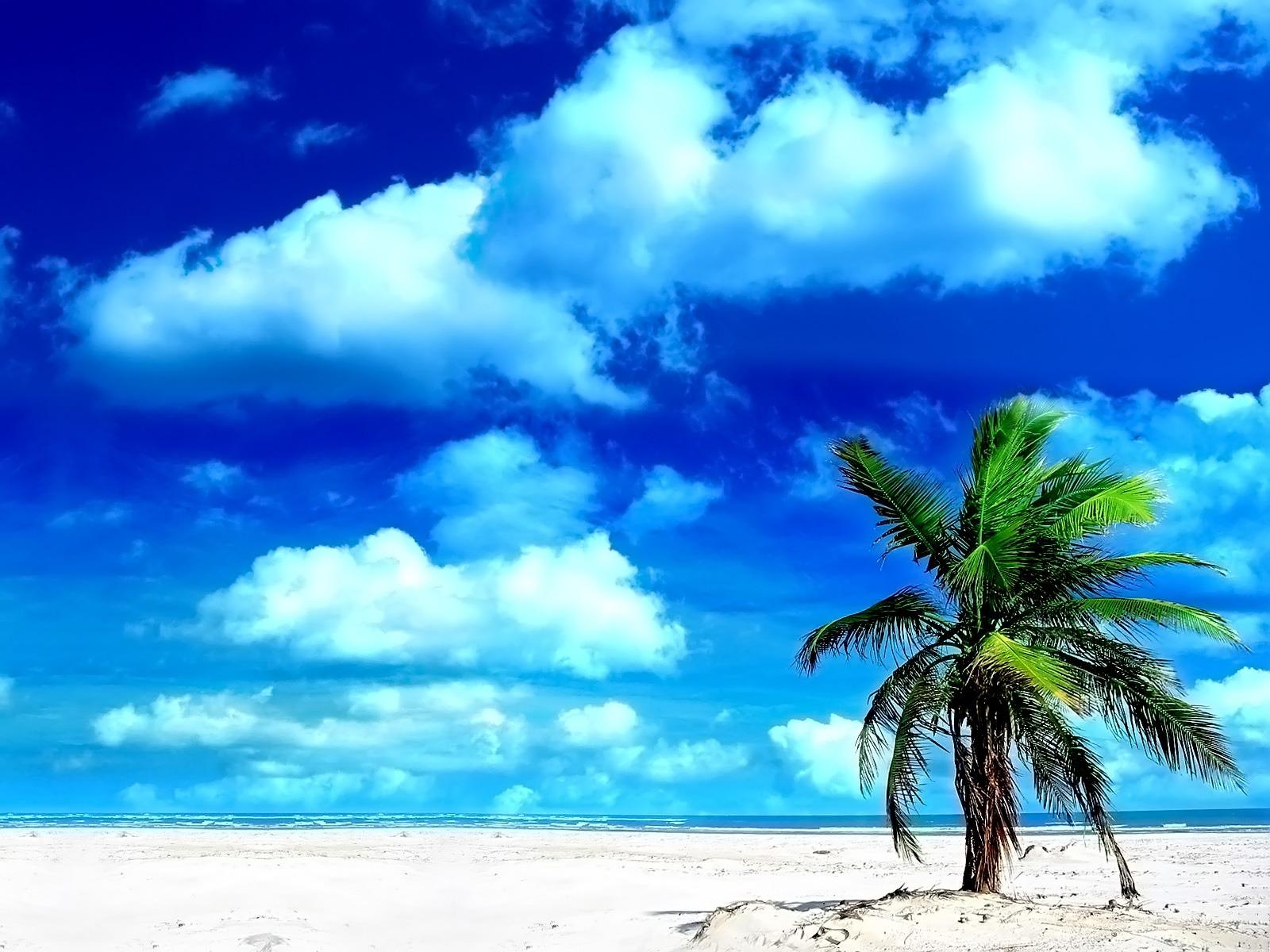 Fond d'ecran Palmier plage ensoleillée - Wallpaper
