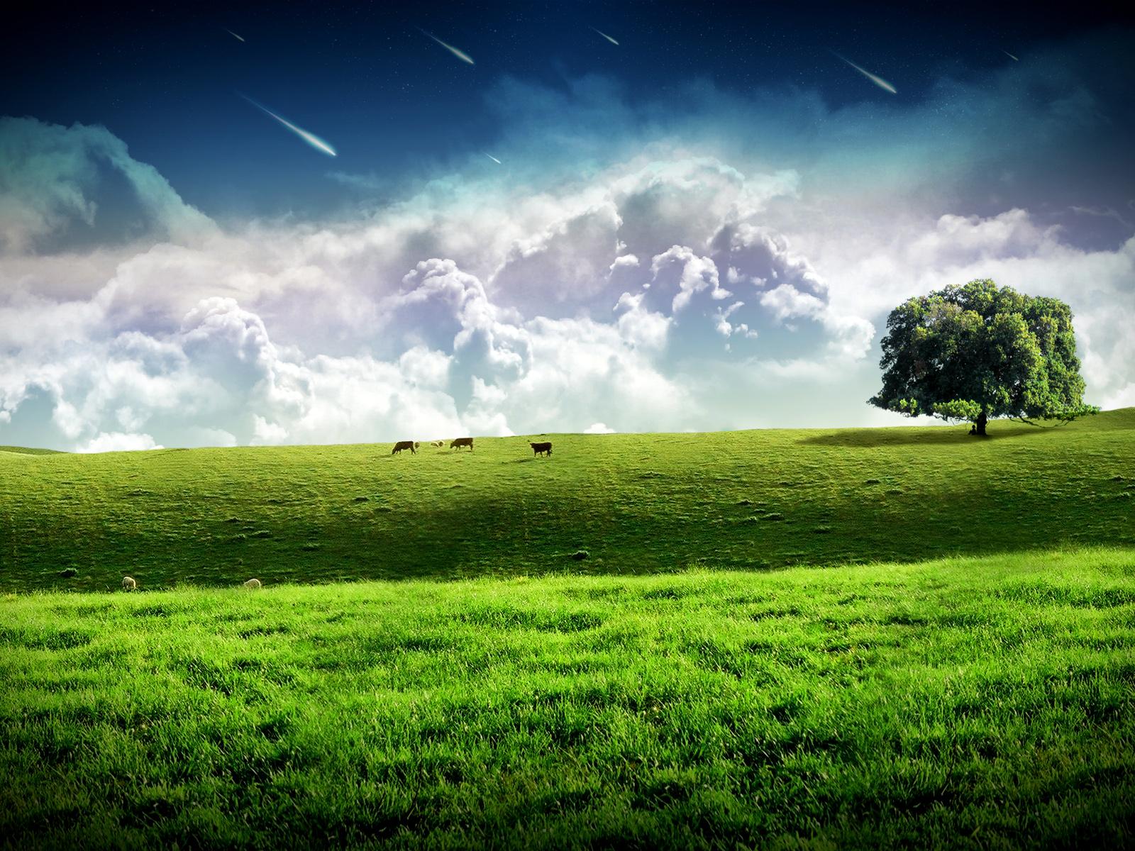 dans III.a.Amour 3098-prairie-dans-les-nuages-WallFizz
