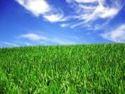 Gazon vert et ciel bleu