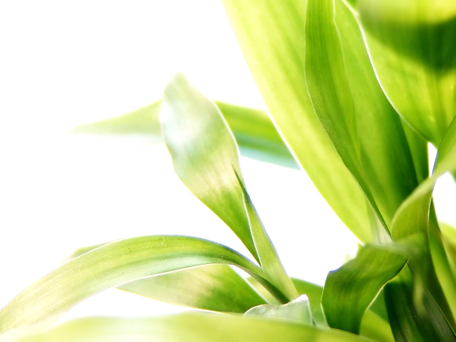 fond d 39 ecran plante oxyg ne wallpaper