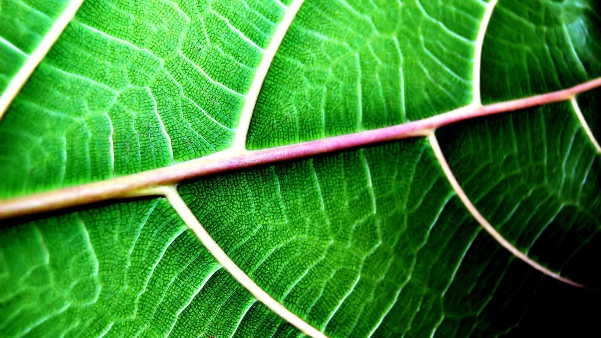 Fond d 39 ecran chlorophylle zoom wallpaper for Espace chlorophylle