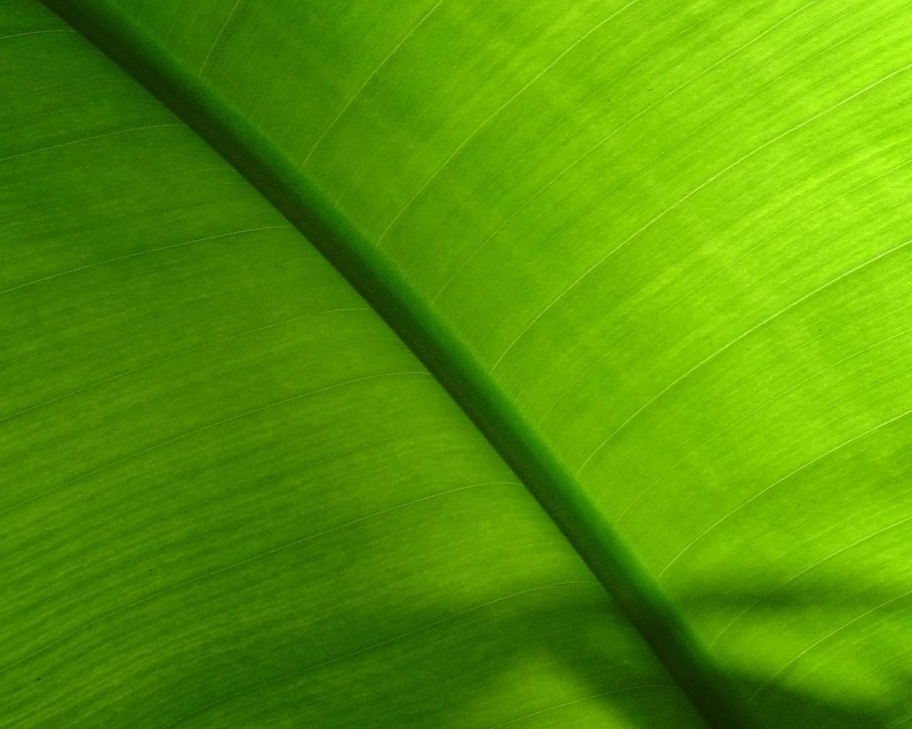 Fond d'ecran Zoom vert chlorophylle - Wallpaper