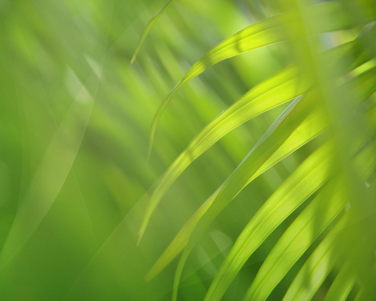 Fond d 39 ecran feuille bien verte wallpaper for Plante 3d gratuit