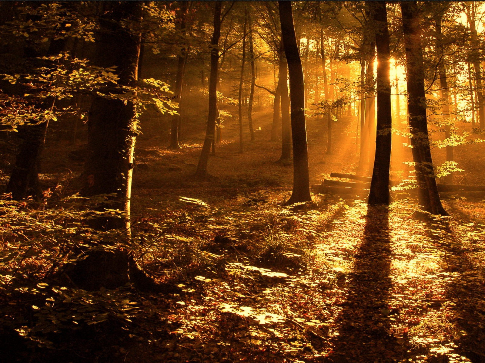 Fond d'ecran Dans les bois - Wallpaper
